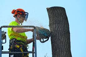 Things To Consider When Hiring A Tree Arborist